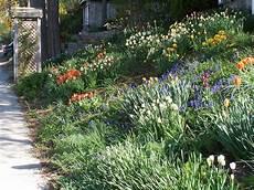plantes vivaces pour talus v 233 g 233 talisation de talus plantes adapt 233 es plantation