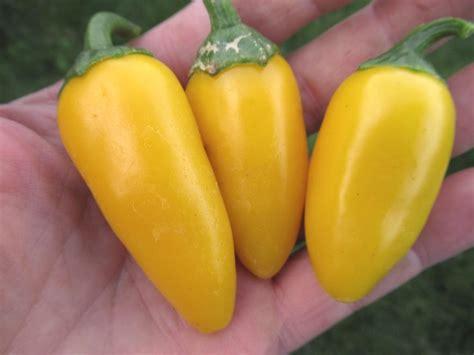 Jalapeno Numex Lemon Spice