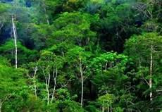 Jenis Jenis Hutan Dan Fungsinya