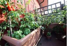 comment cultiver un potager sur balcon