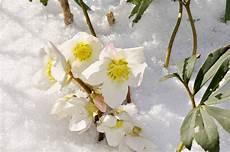 warum bl 252 hen pflanzen im winter