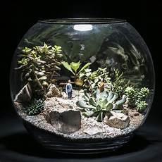 terrarium plantes grasses min 233 ral et vegetal micro