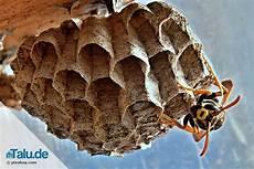wespennest entfernen dieser weg ist der richtige talu de