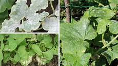 pflanzen gegen schimmel gastartikel 6 faszinierende wege wie zimt ihren