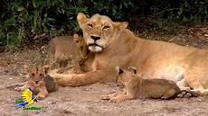 am zoo earth expeditions kenya cincinnati zoo