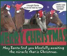 christmas greetings barnmice equestrian social community