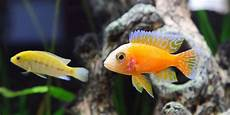 7 Macam Ikan Hias Yang Unik Dan Cantik Mudah Dipelihara