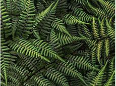 Cool Desktop Wallpaper: Ferns Plants Pictures & Wallpapers
