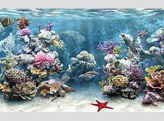 Wallpaper Desk : Aquarium hd wallpaper, aquarium