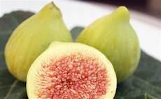 La Figue R 233 Colte Conservation Et Utilisation Des Figues