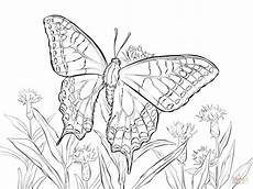 monarch caterpillar drawing at getdrawings free