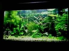 juwel 125 planted aquarium