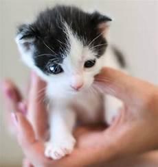 Darf Vermieter Katze Verbieten 4 Gr 252 Nde F 252 R Ein Katzenverbot