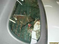 Bird St In My Screen  Design911 Porsche Parts Spares