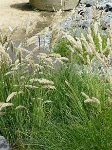 gräser im steingarten ziergr 228 ser im garten annas garten