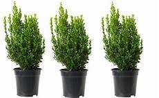 Plantes De Haies Vente De Plantes Et Arbustes Pour Haies