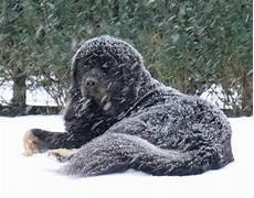 wie lange darf ich meinen kaminofen noch betreiben wie lange kann ein gro 223 er hund unbeschadet im garten seine winterfreude genie 223 en tiere winter