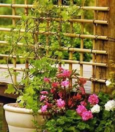 Bambus Stangen Kletterhilfe Rankgitter F 252 R Pflanzen Selber