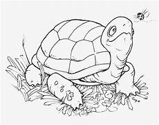 Turtle Coloring Sheet Coloring Pages Turtles Free Printable Coloring Pages