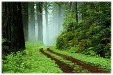 Pemandangan Alam Hutan Wallpaper Pemandanganoce