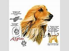 afghaanse windhond t shirt 01 afghaanse windhond kleding