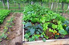 how to plan a vegetable garden the unlimited guide for
