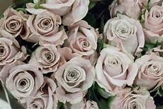 light pink menta rose at new covent garden flower market april 2015 flower market rose