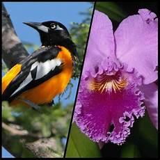 simbolos naturales nacionales venezuela celebra el d 237 a nacional de la orqu 237 dea y del turpial s 237 mbolos naturales del pa 237 s