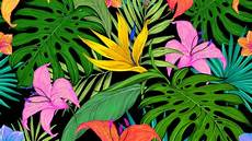 Tropical Flower Wallpaper Hd wallpaper pattern tropical flowers leaves lilies palm
