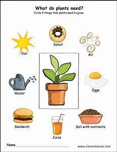 needs of plants worksheets kindergarten 13579 needs of plants worksheets for preschool preschool worksheets children science plants