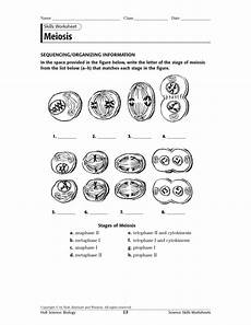 meiosis skills ws