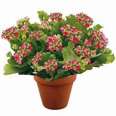 Plante Fleurie Quot Plante Fleurie Quot Livraison En Suisse