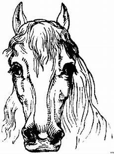 pferdekopf vorne ausmalbild malvorlage pferde