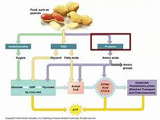 what is the energy source used for cellular respiration quora