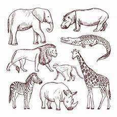 Ausmalbilder Verschiedene Tiere Different Animals Of Savana And Africa Premium Vector