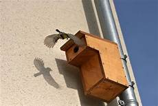 nichoirs la ligue pour la protection des oiseaux auvergne