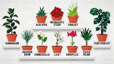giftige pflanzen f 252 r katzen