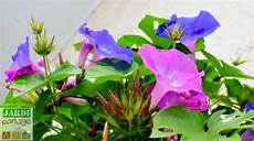 10 Plantes Grimpantes Qui Raffolent Du Soleil Jardipartage