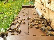 sterben bienen im winter alle artikel immenfreund vorstellung meiner imkerei