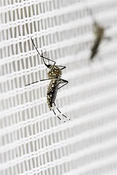 Stechmücken Bekämpfen Schlafzimmer - stechm 252 cken bek 228 mpfen oder vertreiben die besten