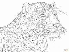 Malvorlagen Tiger Hill Portrait Of Indian Leopard Coloring Page Free Printable