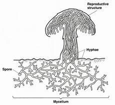 diagram of fungus diag mushrooms mushrooms