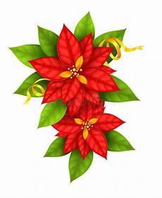 immagini di fiori da stare la stella di natale fiorisce la stella di natale con il