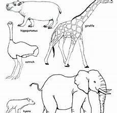 savanna animals coloring pages at getdrawings free