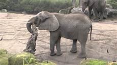 Malvorlage Afrikanischer Elefant Afrikanischer Elefant Testosteron