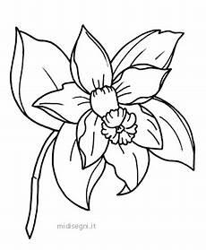 orquidea nacional para colorear blogger user profile lore