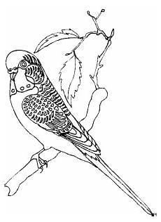Malvorlage Vogel Auf Ast Verzierter Vogel Auf Einem Ast Ausmalbild Malvorlage Tiere