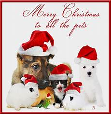 merry christmas to all the pets pictures photos and images for facebook pinterest