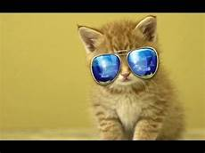 Katze Mit Sonnenbrille - cats wearing glasses compilation 2014