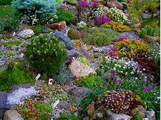 Pflanzen Am Teich Alpine Pflanzen Am Gartenteich Garten Alpine Garten Steingarten Und Alpine Pflanzen